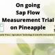 On going Sap Flow Measurement Trial on Pineapple
