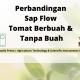 Perbandingan Sap Flow Tomat Berbuah dan Tanpa Buah