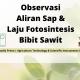 Observasi Aliran Sap & Laju Fotosintesis Bibit Sawit